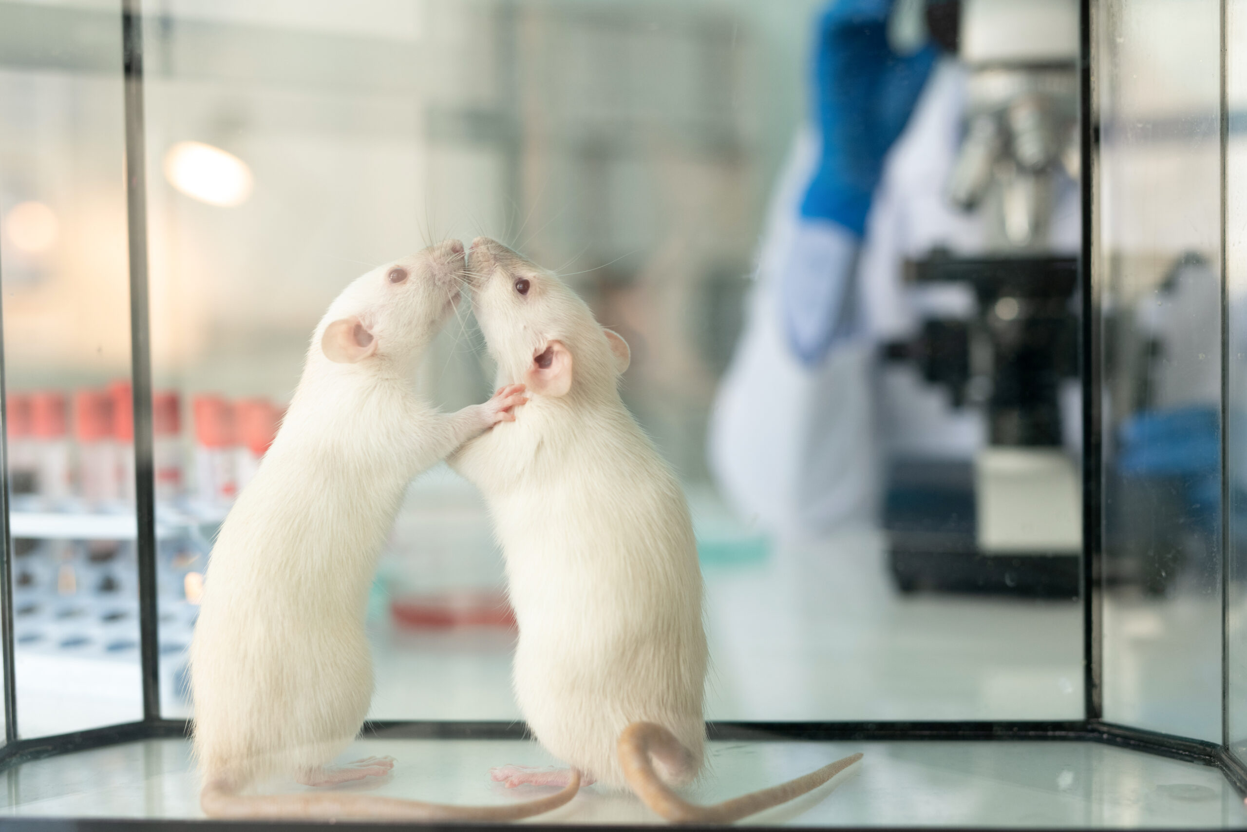 Lab rats in glassy box