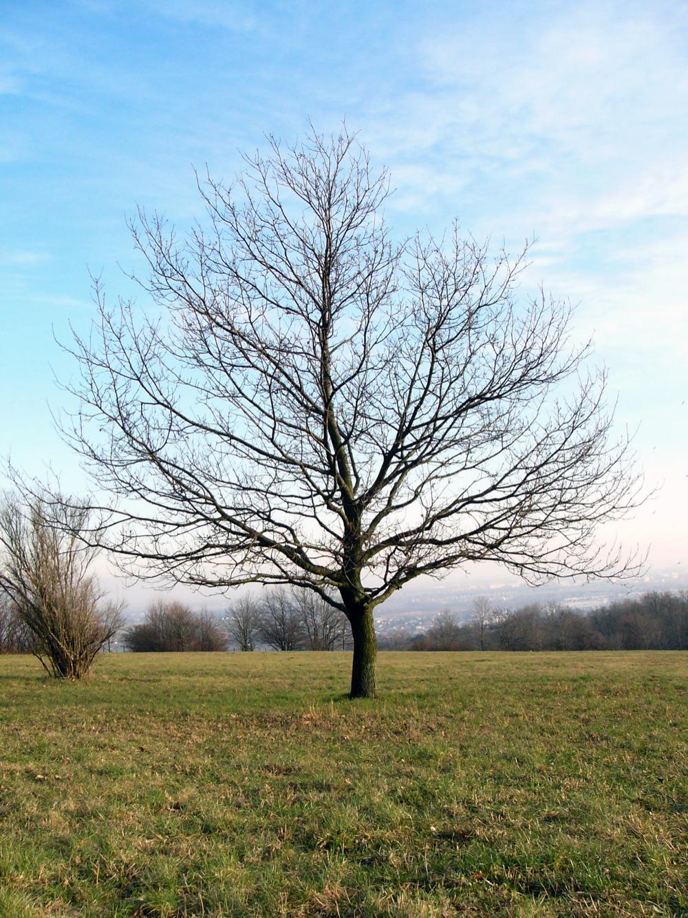 Winter Tree New Calendar Template Site